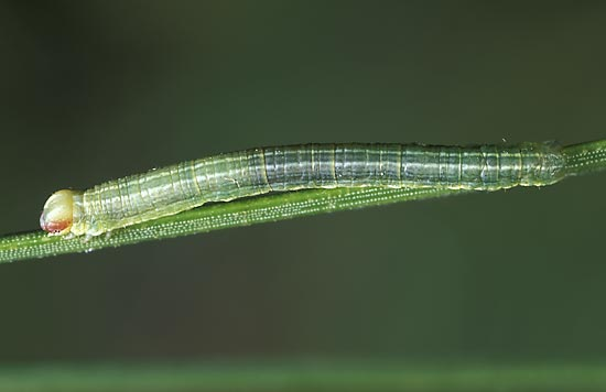 - Dorso-lateral view of