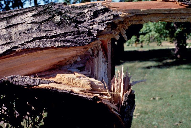 Wind damage -