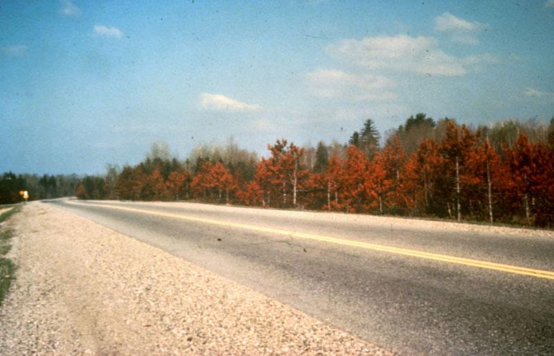 Road salt injury